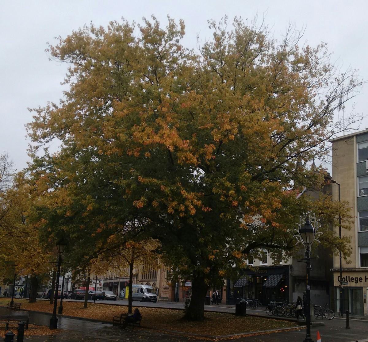 Sponsor or adopt a Bristoltree