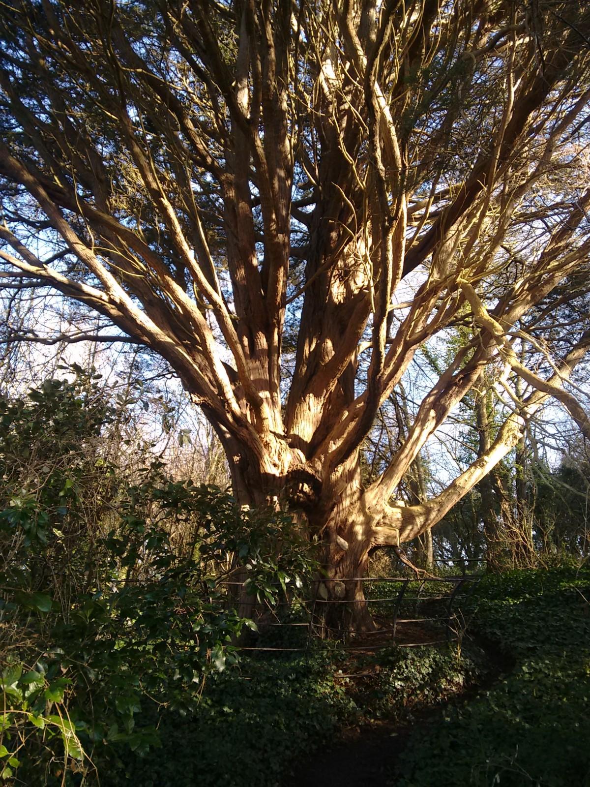 A secret arboretum
