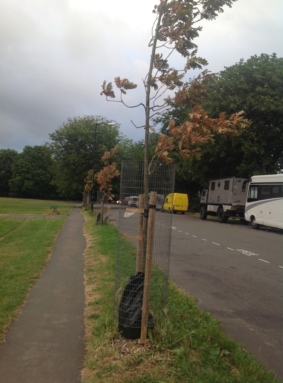 Urgent help needed to water new trees – an update – more new street trees dying
