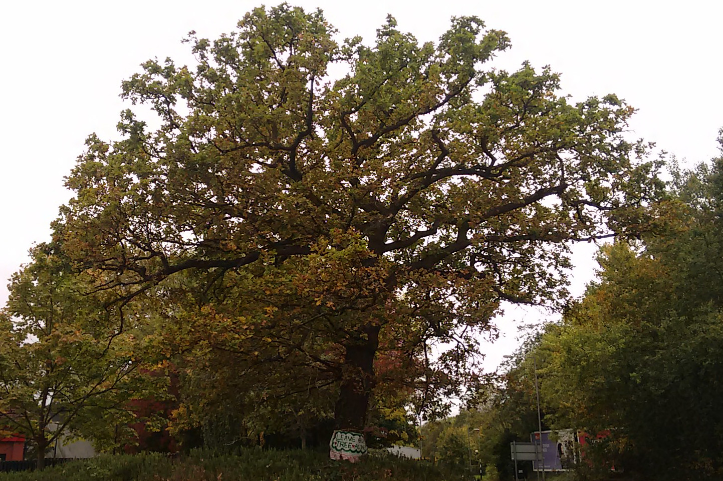 eastgate_oak