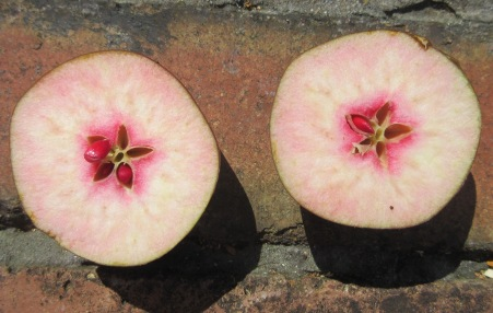 BCC-64242 - Oakenhill Apple cut fruit 2