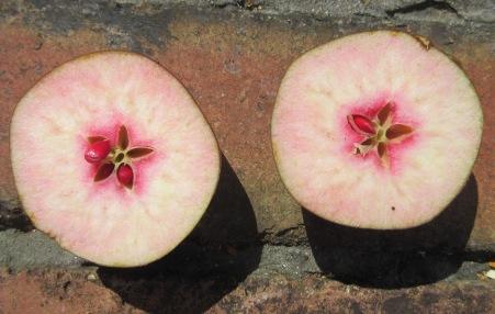 BCC-64242 - Oakenhill Apple cut fruit 2