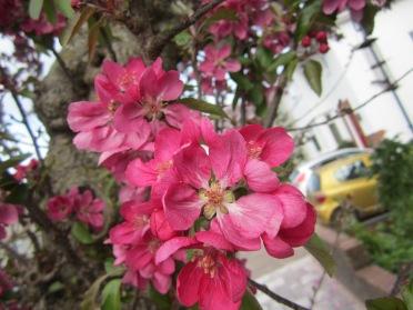BCC-64242 - Oakenhill Tree Blossom