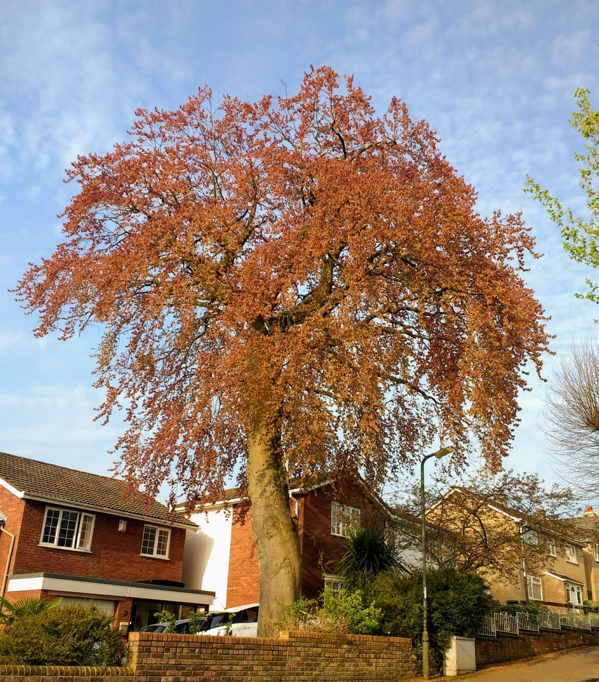 The Bristol Tree of the Year Competition, 2018