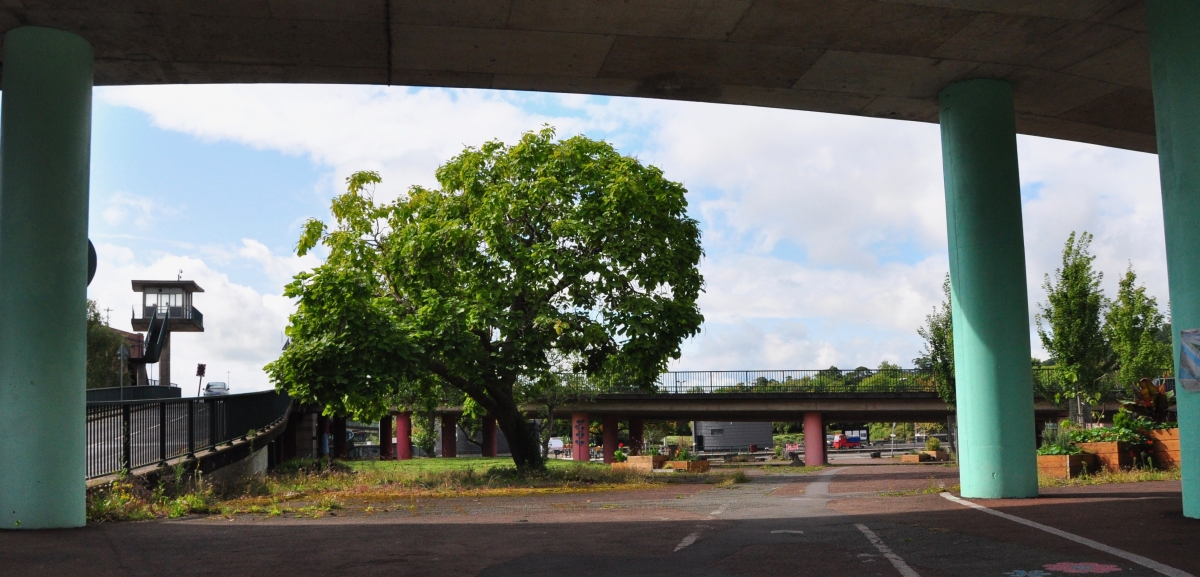A Manifesto for protecting Bristol's existing Urban Forest