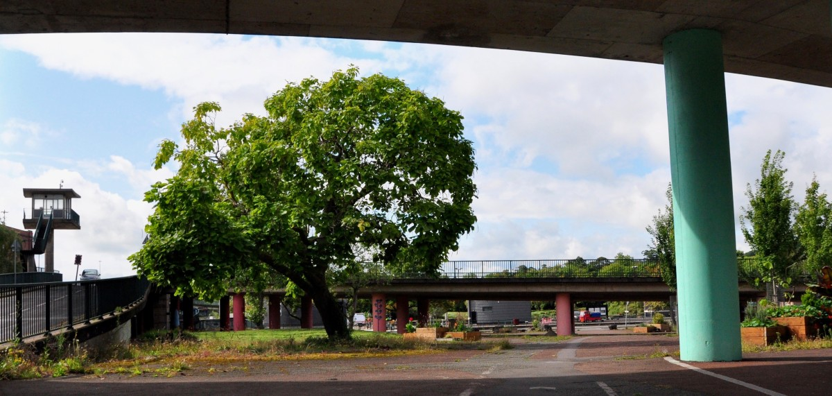 Changes agreed to Bristol Tree Replacement Standard