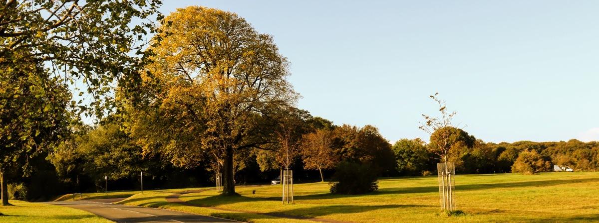 Bristol Tree ForumAGM