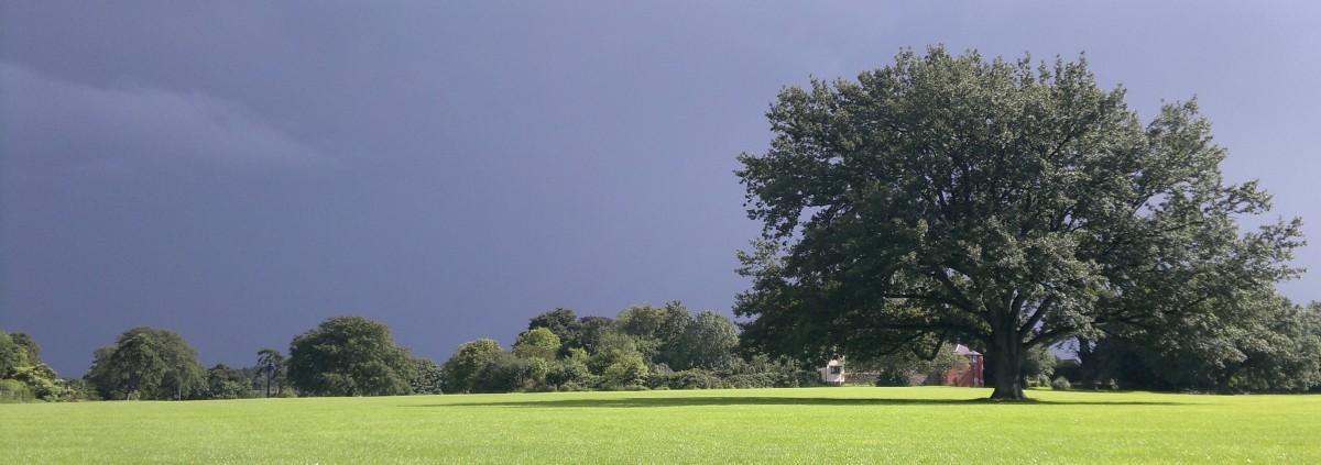Council no longer manages trees on educational sites – PartI