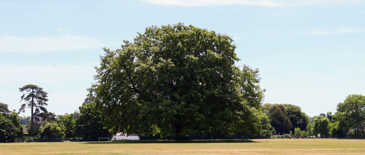 Wales and West Utilities helps to protect Bristol's precious trees