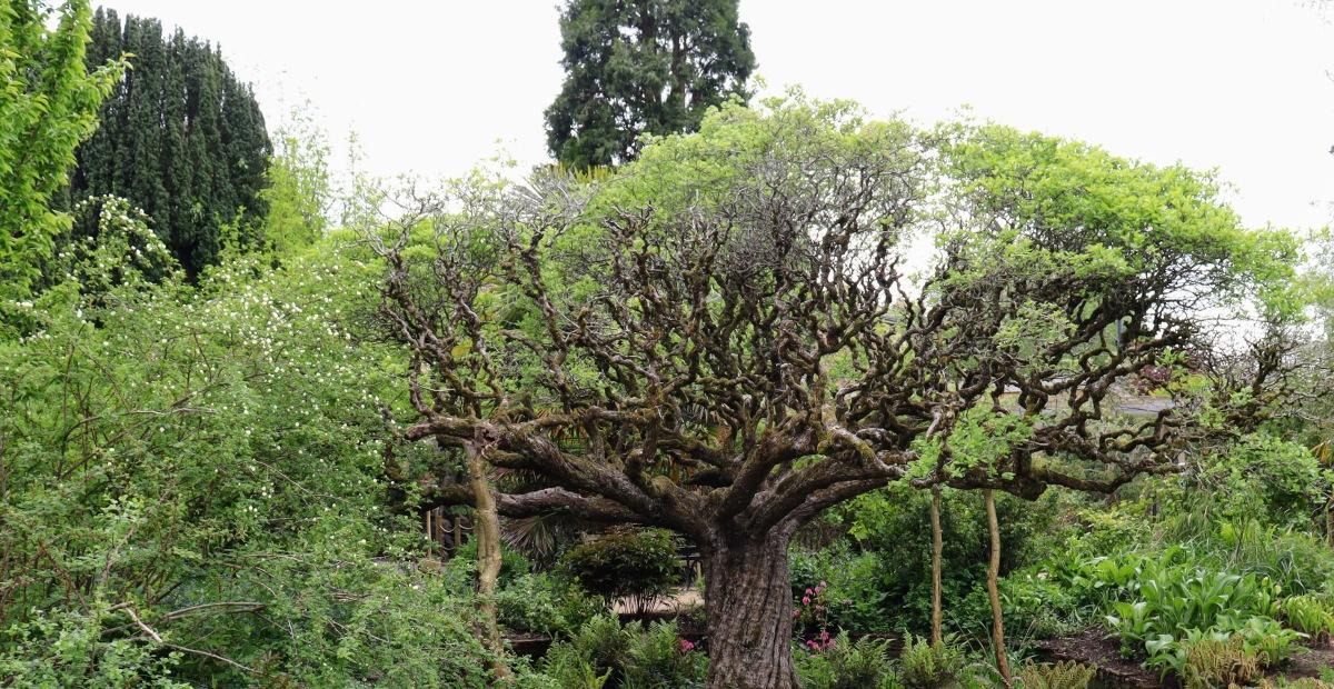 Bristol's Tree Canopy