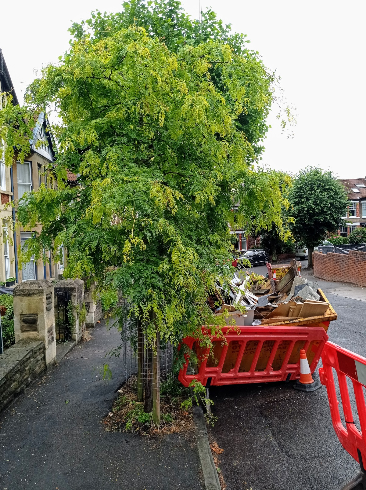 Valuing our urbantrees